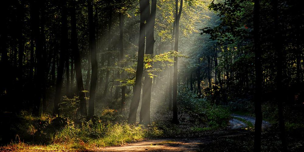 Zespół Przyrodniczo-Krajobrazowy karsibór - fot. Sebastian Bezak